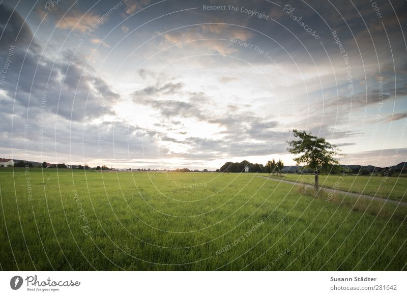 to the light. Nature Wind Meadow Field Cold Horizon Goodbye Sun Clouds Tree Individual Heaven Sunlight Exterior shot Deserted Morning Dawn Deep depth of field