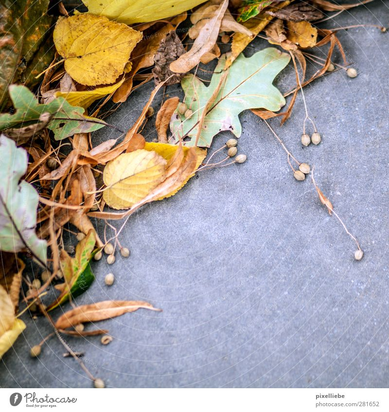 Autumn mood Nature Plant Leaf Park Stone Concrete Lie Natural Beginning End Climate Environment Environmental protection Decline Transience Change Autumnal