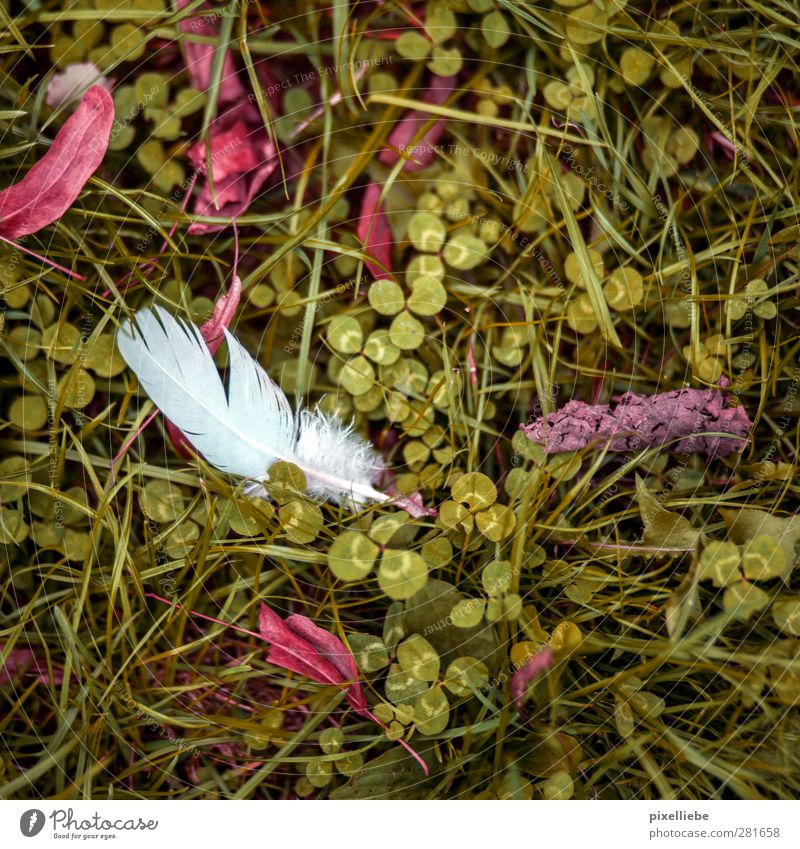 feather Garden Environment Nature Plant Autumn Grass Leaf Park Meadow Animal tracks Natural Green Clover Cloverleaf Autumnal colours Autumn leaves Feather