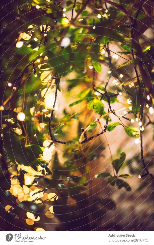 decoration light christmas celebration hanging on tree, abstract image blurred defocused background Light Garden Night Terrace Exterior shot Decoration