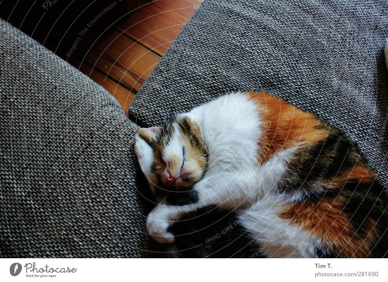 from now on it's quiet Flat (apartment) Furniture Sofa Animal Pet Cat 1 Stagnating lucky cat Colour photo Interior shot Deserted Day Shadow