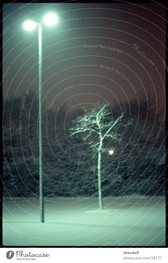 Tree Winter Snow Lantern Neon light Fluorescent substance