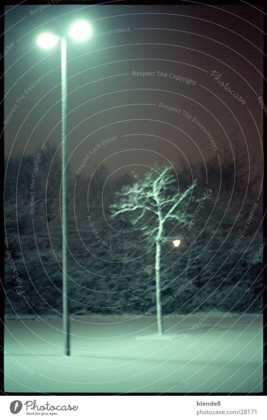 Tree Winter Snow Lantern Neon light Fluorescent substance