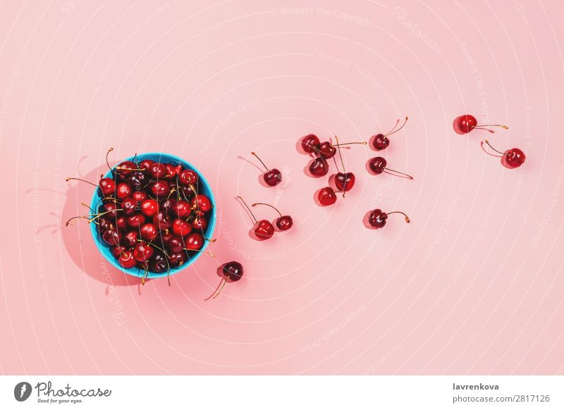 Blue bowl full of fresh organic cherries on pink background Berries Cherry Colour Conceptual design Delicious Dessert Diet Woman Food Fresh Fruit Harvest