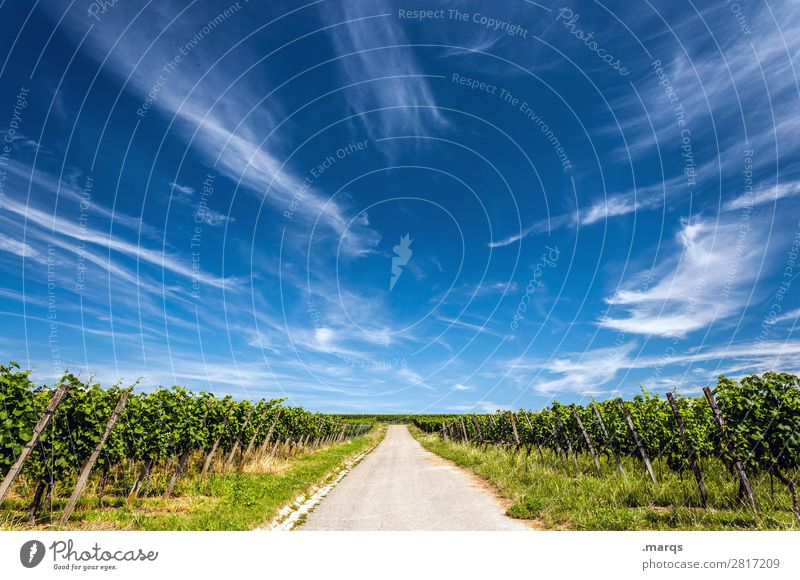 Kaiserstuhl Nature Landscape Sky Clouds Summer Beautiful weather Agricultural crop Vine Wine growing Street Relaxation Target Future Colour photo Exterior shot