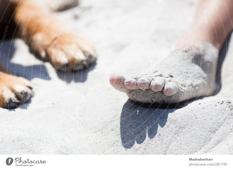 Foot and paw Vacation & Travel Summer Summer vacation Beach Girl Youth (Young adults) Life Feet 1 Human being Sand Animal Pet Dog Relaxation Lie Together
