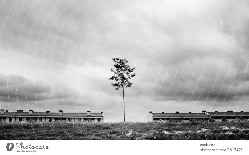 Tree between houses Village Town Discover House (Residential Structure) City Exterior shot Black & white photo Morning Day Central perspective