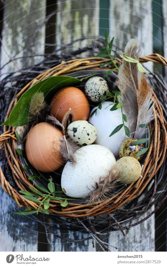 Easter nest Egg Feather Feasts & Celebrations Spring Plant Nest Safety (feeling of) Protection Nature Farm Search Eggshell Hide Life Green White Brown find
