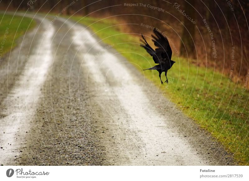 on the run Environment Nature Landscape Plant Animal Elements Earth Sand Grass Park Meadow Wild animal Bird Wing 1 Wet Natural Brown Gray Green Black
