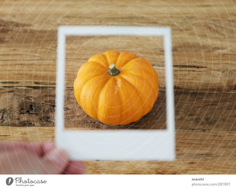 pumpkin season Food Vegetable Nutrition Eating Orange Pumpkin Hallowe'en Polaroid Frame Pumpkin time Pumpkin plants Pumpkin soup Colour photo Interior shot
