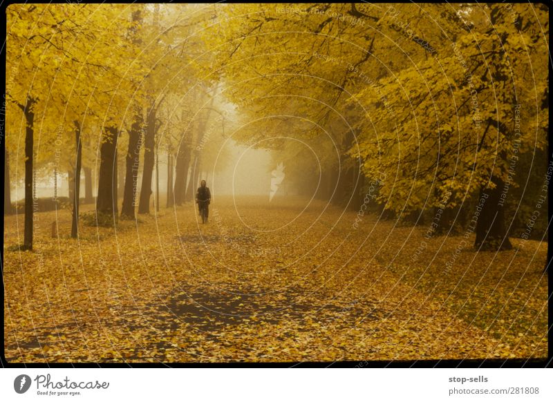 In the middle of the tree frog Autumn Forest Autumn leaves Autumnal Fog Cloud forest Yellow Calm Loneliness Park Deciduous tree Magic Cold Lanes & trails Street