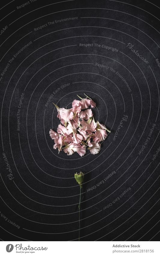 Flowers on black background. Flat lay, top view Background picture Love Consistency Blossom leave Gift Natural Floral