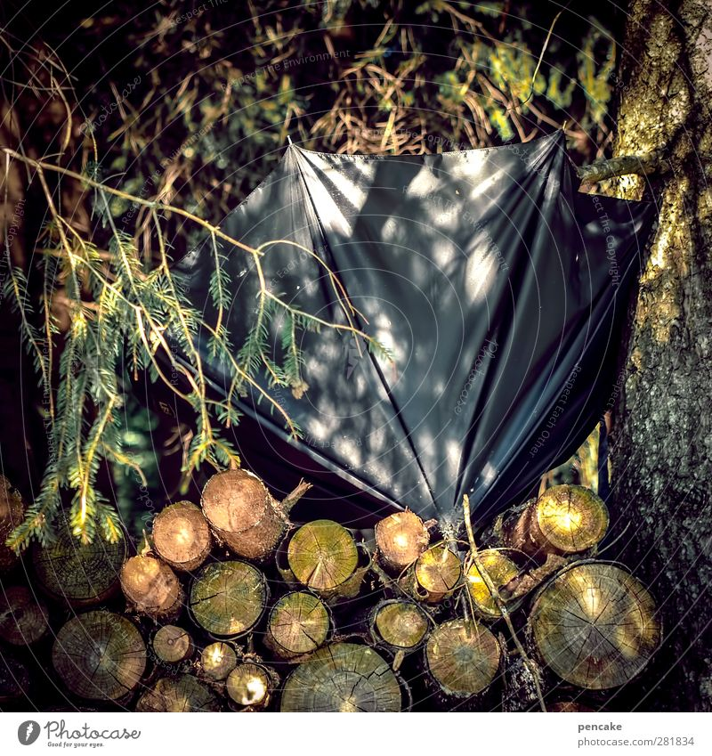 sunney Nature Beautiful weather Tree Forest Wood Black Umbrella Broken Forget Fir branch Stack of wood Colour photo Exterior shot Day Reflection