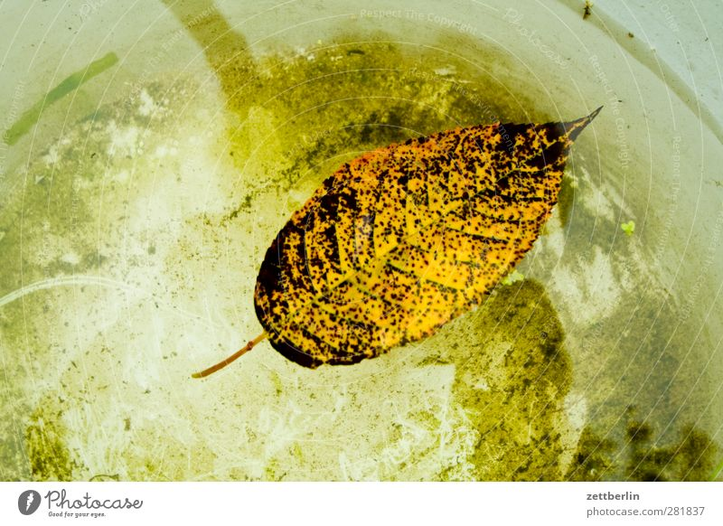 Nature Water Tree Flower Loneliness Leaf Mountain Autumn Garden Transience Longing Float in the water Autumn leaves Wanderlust Bowl Exhaustion