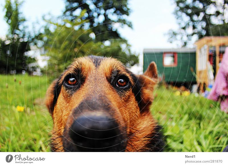 Luzi Nature Grass Pet Dog Touch Wait Beautiful Blue Green Colour photo Exterior shot Deep depth of field Long shot Animal portrait Looking into the camera
