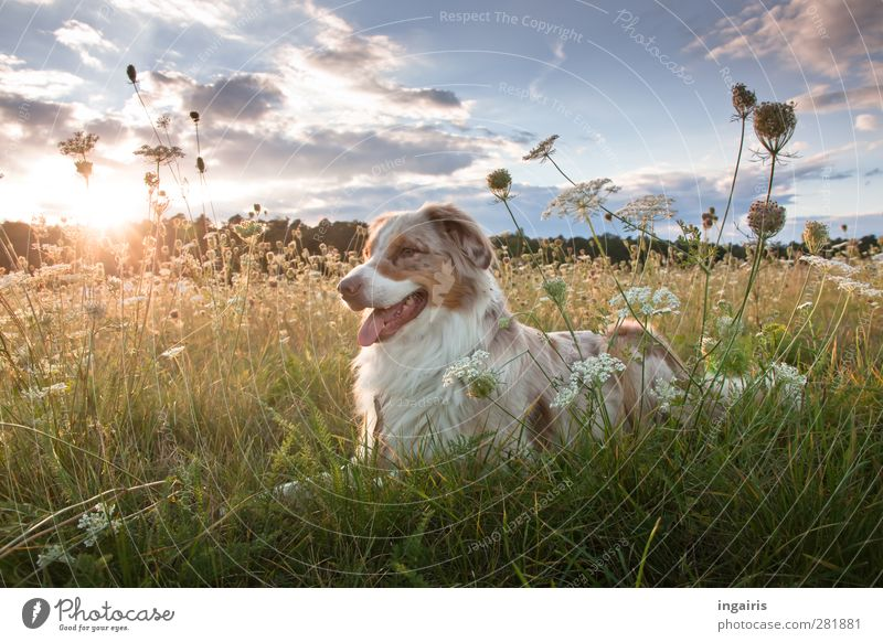 Dog Sky Nature Blue Green White Plant Animal Clouds Landscape Relaxation Yellow Meadow Grass Freedom Gray