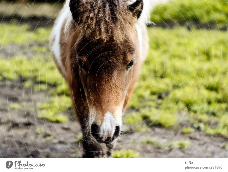 Green Summer Animal Winter Meadow Autumn Grass Spring Baby animal Gray Small Brown Walking Wait Observe Horse