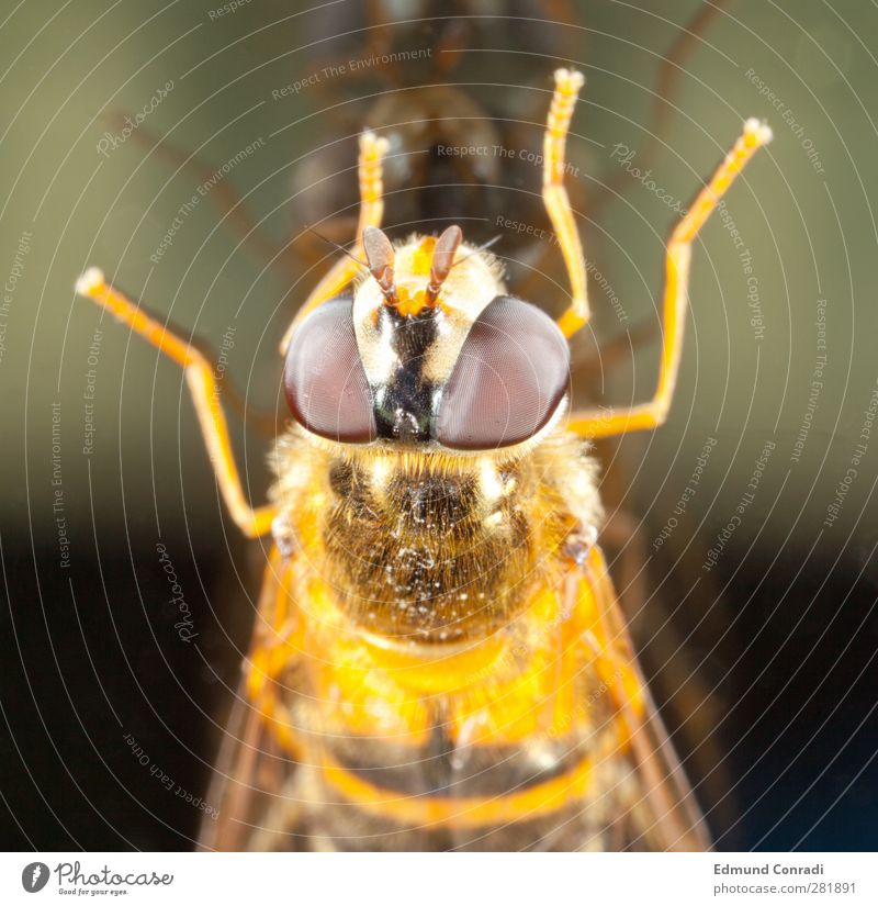 mirror image Glass Mirror Eyes Nature Compound eye Quality Mirror image Animal portrait Colour photo Reflection Looking into the camera