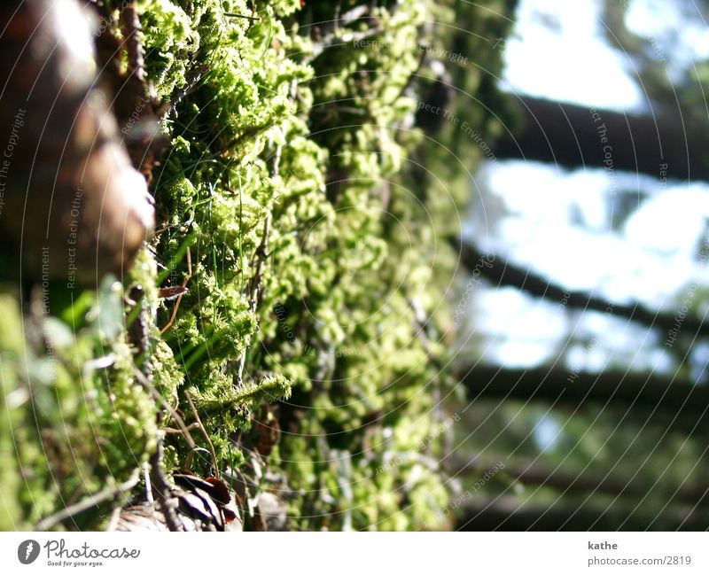 Tree Green Moss Fir needle