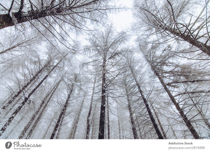 Forest in winter day Nature Winter Snow Cold Landscape White Frost Tree Seasons Scene Beautiful Weather Day Ice Snowfall Vacation & Travel Freeze Light
