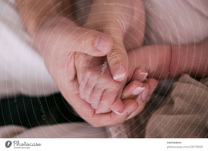 parents hands holding newborn infants hand Baby Parents Adults Mother Father Infancy Hand 3 Human being 0 - 12 months 18 - 30 years Youth (Young adults) Touch