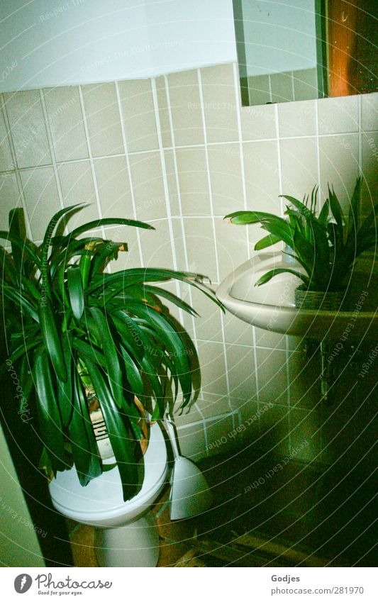 Plants standing on toilet and in sink in front of tiled wall Living or residing Flat (apartment) Arrange Bathroom Nature Foliage plant Pot plant Glass