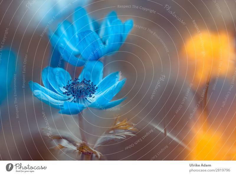Nature Summer Plant Blue Flower Yellow Blossom Spring Garden Design Decoration Illuminate Birthday Blossoming Wedding Easter