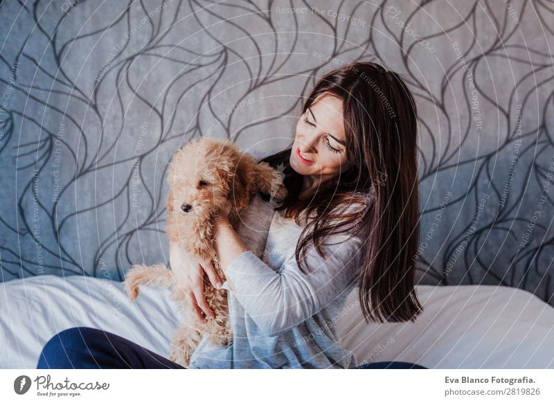 cute brown toy poodle at home with his owner Lifestyle Joy Happy Beautiful Leisure and hobbies Freedom House (Residential Structure) Human being Feminine