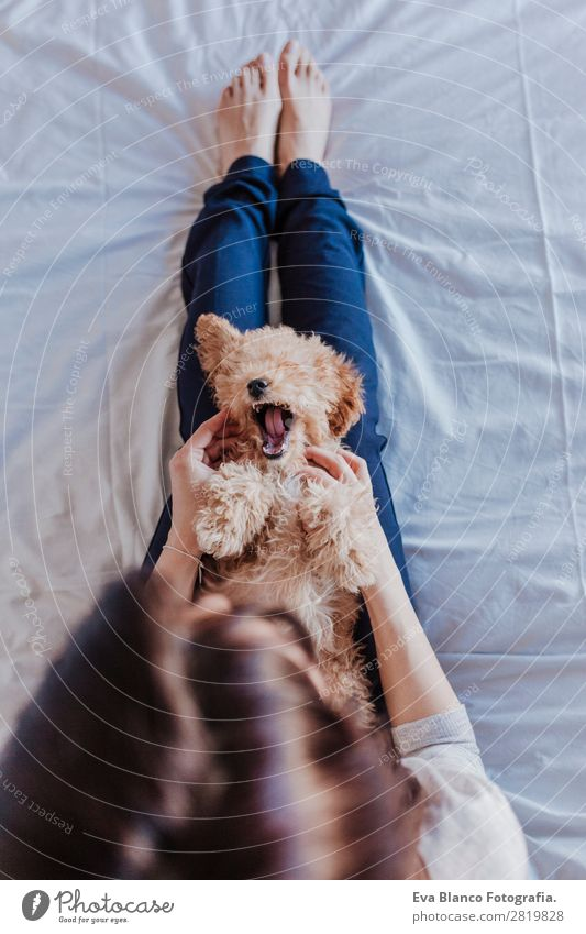 portrait of a Cute brown toy poodle with owner Lifestyle Joy Happy Beautiful Leisure and hobbies Freedom House (Residential Structure) Human being Feminine Baby