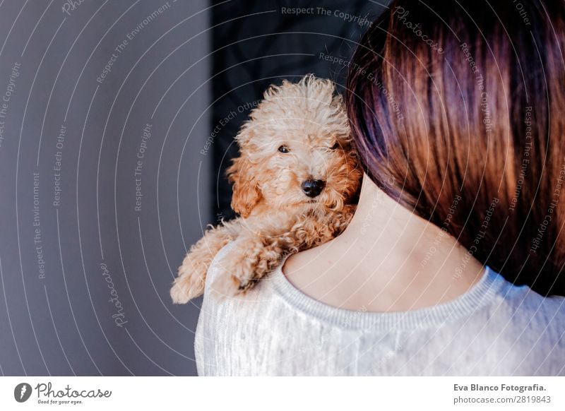 Cute toy poodle with his owner at home Woman Human being Dog Youth (Young adults) Young woman Beautiful Hand House (Residential Structure) Animal Joy Lifestyle