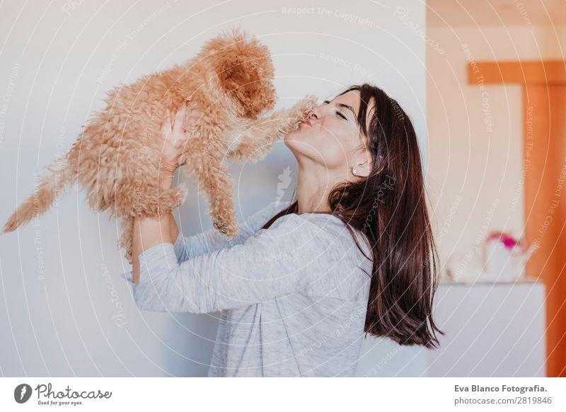 Cute toy poodle with his young owner at home Woman Human being Dog Youth (Young adults) Young woman Beautiful Hand House (Residential Structure) Animal Joy Face