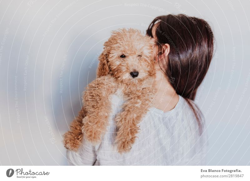 Cute brown toy poodle with his owner at home Lifestyle Joy Happy Beautiful Leisure and hobbies Freedom House (Residential Structure) Human being Feminine