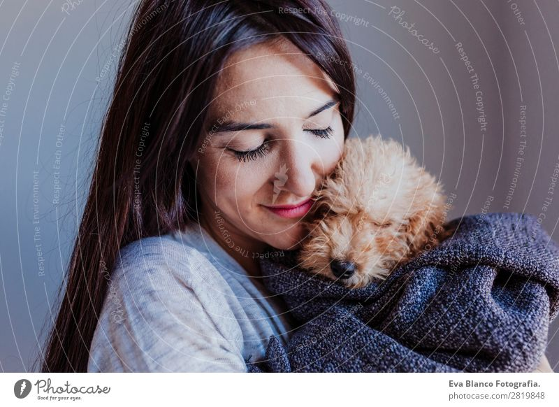 portrait of a Cute brown toy poodle with owner Woman Human being Dog Youth (Young adults) Young woman Beautiful Hand House (Residential Structure) Animal Joy