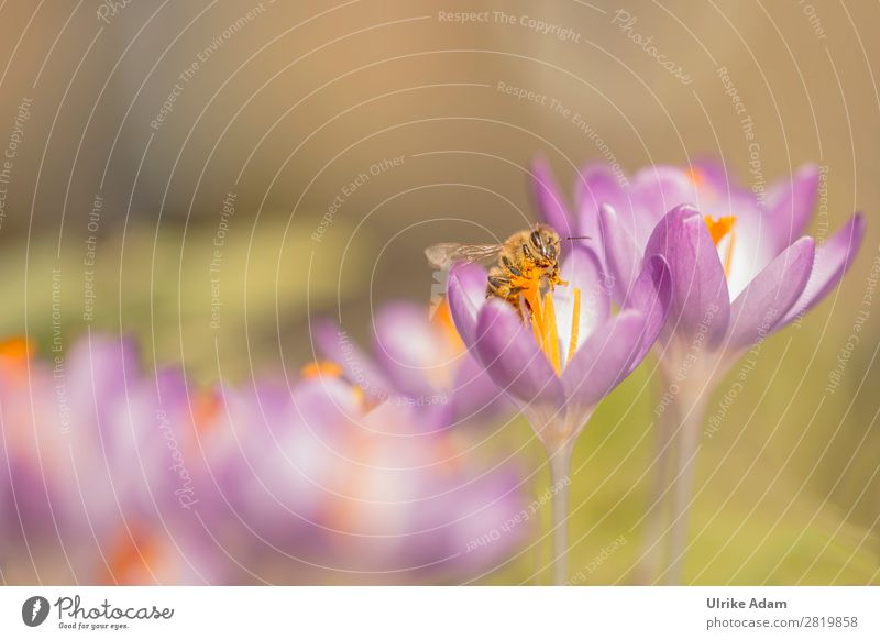 Nature Plant Flower Animal Healthy Environment Blossom Spring Garden Pink Wild animal To enjoy Wing Easter Wellness Insect