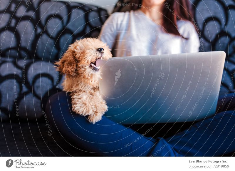 Cute toy poodle with his young owner at home Lifestyle Joy Happy Beautiful House (Residential Structure) Sofa Cellphone PDA Notebook Technology Human being