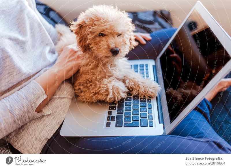 Cute toy poodle with his young owner at home. Lifestyle Joy Happy Beautiful House (Residential Structure) Sofa Cellphone PDA Notebook Technology Human being