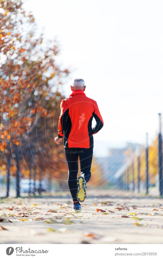 Rear view of a senior man in sport clothes jogging in the park Lifestyle Sports Jogging Human being Masculine Man Adults Male senior 1 60 years and older