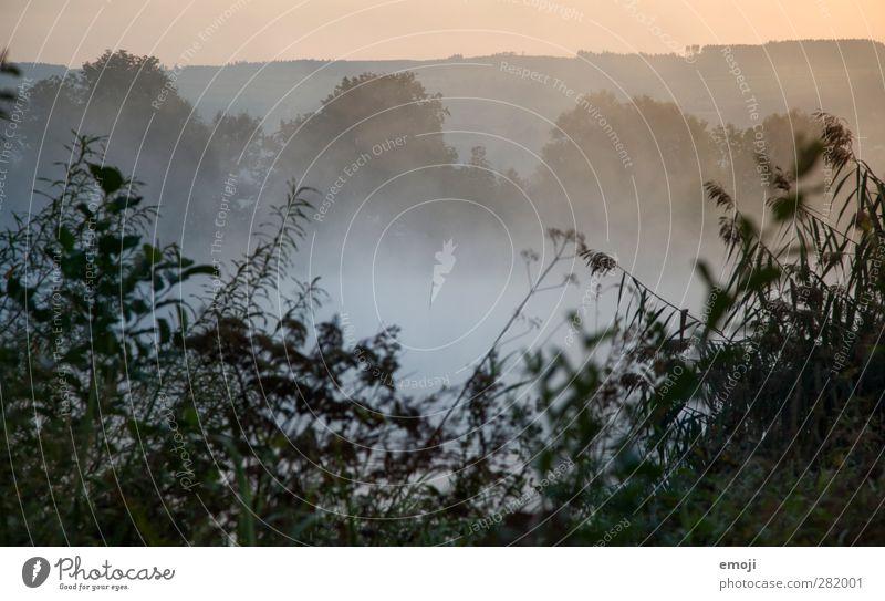 fog lake Environment Nature Landscape Plant Autumn Fog Bushes Cold Natural Sea of fog Colour photo Exterior shot Deserted Morning Dawn Shallow depth of field