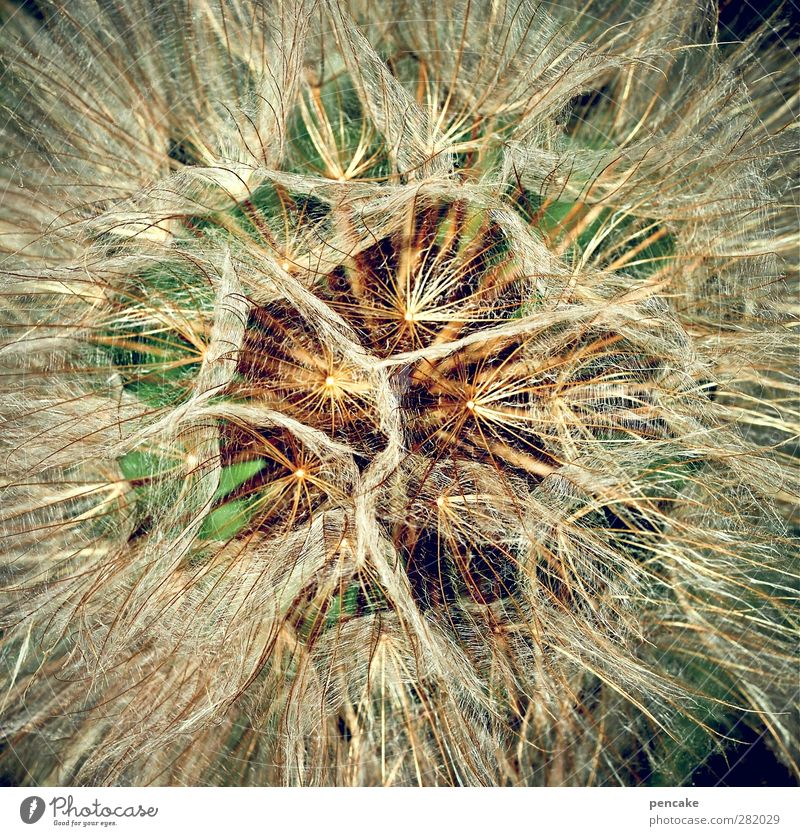 Nature Plant Flower Blossom Dandelion Discover Blow Seed Optimism Complex Parachute Summerflower Seed plant Meadow Salsify