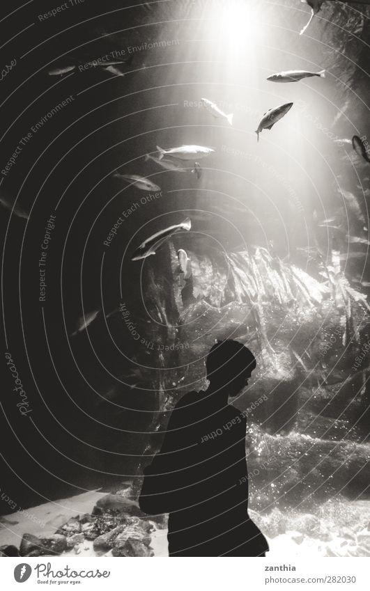 aquarium North Sea Swimming & Bathing Large Black White Esthetic Movement Uniqueness Discover Exotic Mysterious Idea Idyll Creativity Art Nature Curiosity