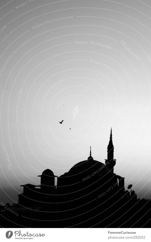 Mosque. Town Capital city Port City Building Architecture Tourist Attraction Monument Belief Religion and faith Moslem Istanbul Turkey Skyline Bird