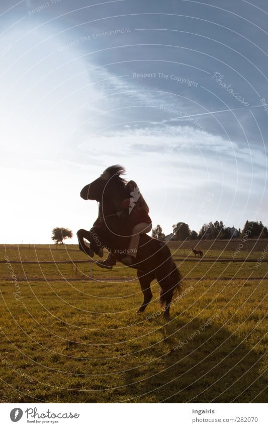 Tempramentary Icelander Ride Equestrian sports Feminine 1 Human being Nature Landscape Air Sky Clouds Sun Sunlight Meadow Animal Horse Iceland Pony Movement