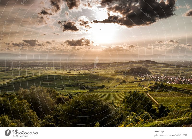 Kaiserstuhl Landscape Sky Clouds Summer Beautiful weather Plant Agricultural crop Hill Vine Wine growing Relaxation Moody Nature Colour photo Exterior shot
