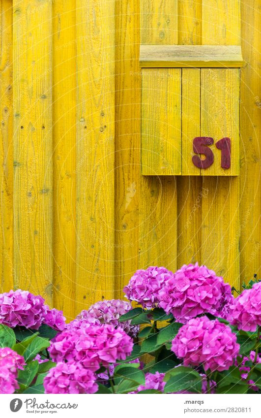 51 Living or residing Flower Wooden wall Mailbox Digits and numbers Yellow Violet Colour Ecological Colour photo Exterior shot Structures and shapes Deserted