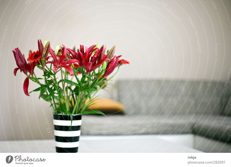 Beautiful Flower Style Interior design Bright Moody Room Flat (apartment) Lifestyle Living or residing Decoration Blossoming Sofa Bouquet Living room Fragrance