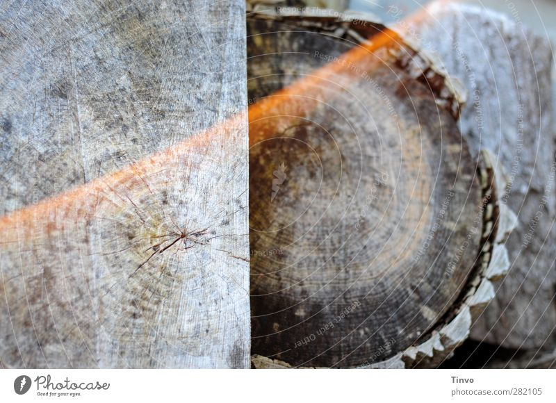 matured wood Nature Dry Gray Wood Firewood Weathered Tree trunk sawed Cross-section Annual ring Log Subdued colour Exterior shot Close-up Detail Deserted