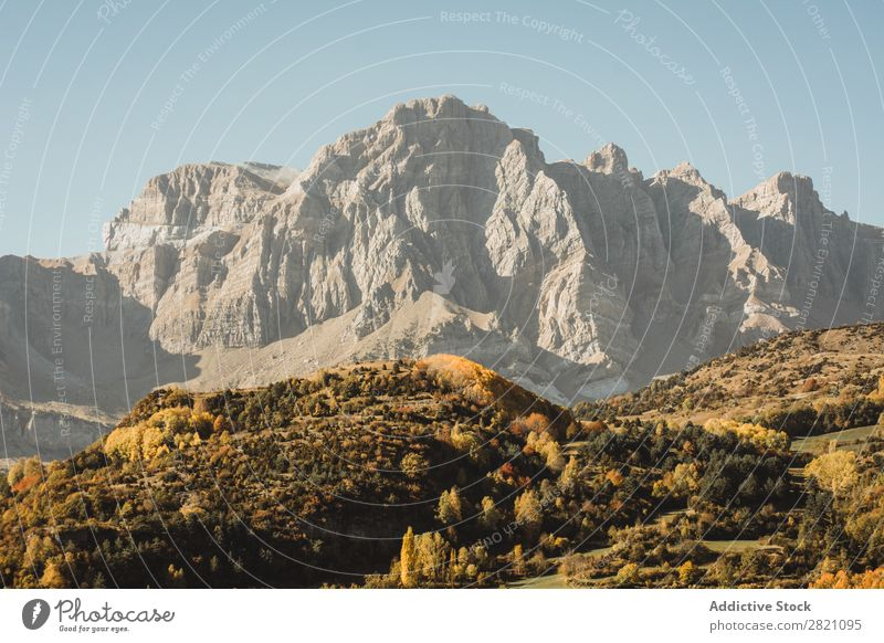 Sunny high hill and autumn forest Forest Mountain Hill Autumn Orange Landscape Peak Nature Environment scenery Natural Vacation & Travel Beautiful Vantage point