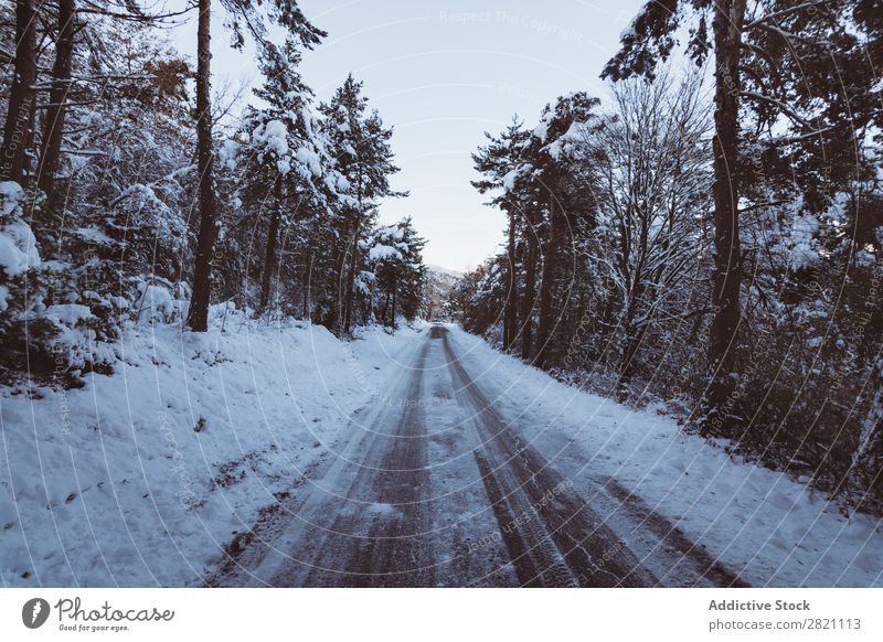 Road in forest in snow Street Winter Forest Snow Cold Asphalt Landscape White Nature Seasons Ice Frost Drive Vacation & Travel Frozen Weather Countries Rural