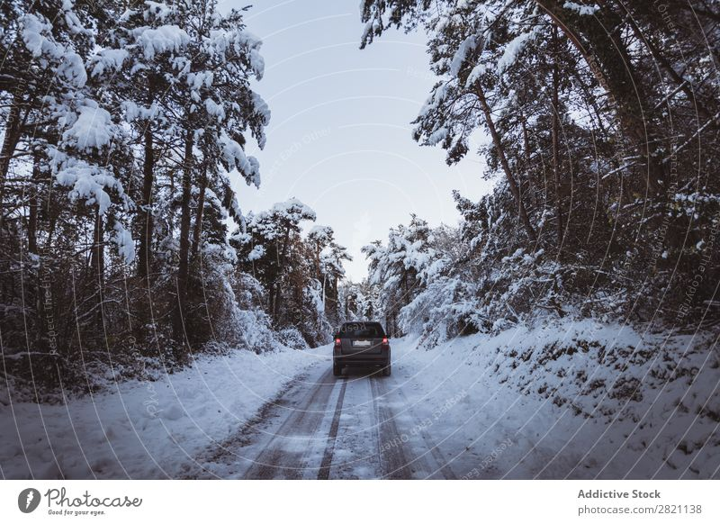 Off roadster in the forest Car Street Winter Forest off roadster Snow Cold Landscape White Nature Seasons Ice Frost Drive Vacation & Travel Frozen Weather