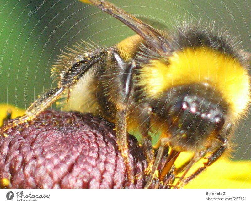 grumbler Soft Bumble bee Far-off places Garden tele g3 Tongue